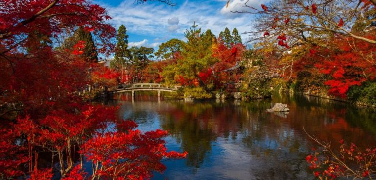 20 of the Best Japanese Gardens in the UK!